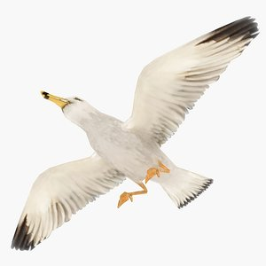 3d model seagull sea