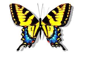 3dsmax tiger swallowtail