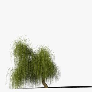 3d model willow tree