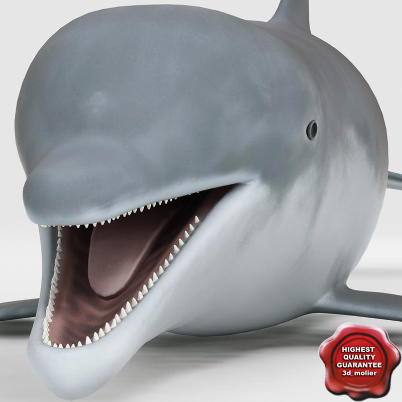 max dolphin modelled