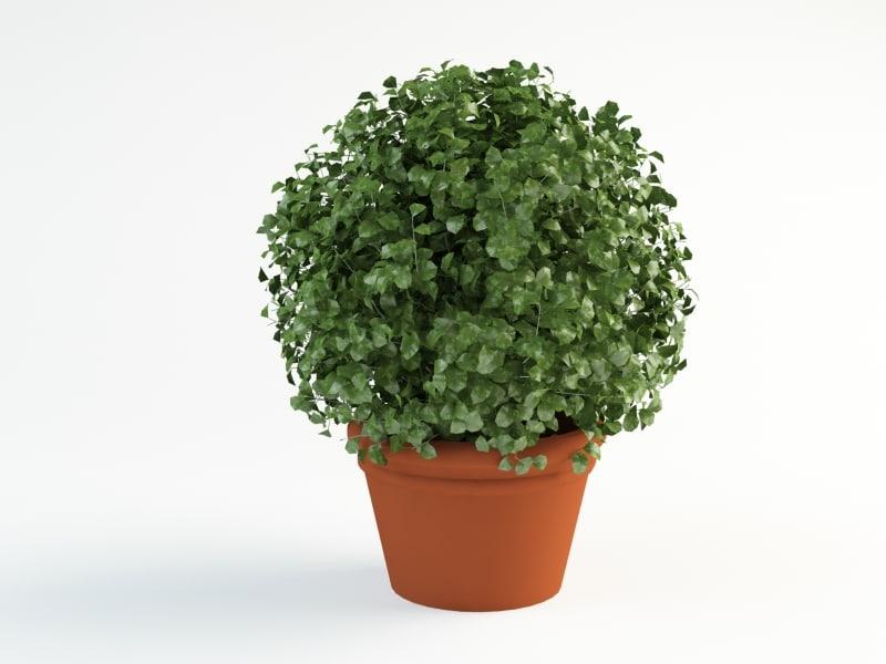 3d bush shrub