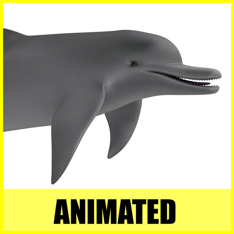 3d dolphin animation model