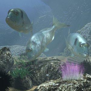 sea bream rigged underwater scene 3d model
