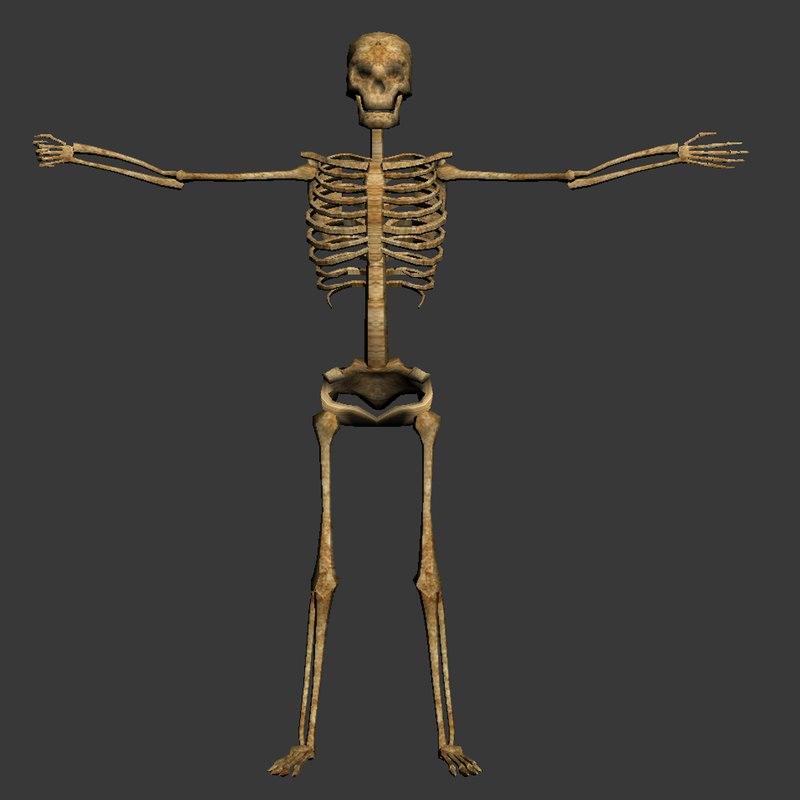 skull skeleton 3d model