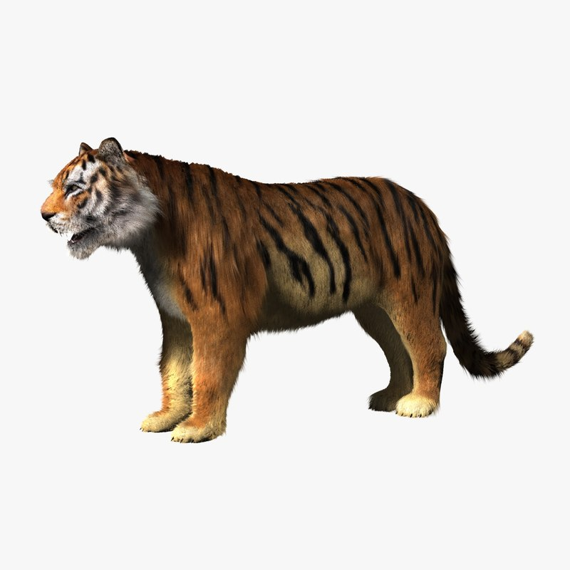 tiger animation 3d model