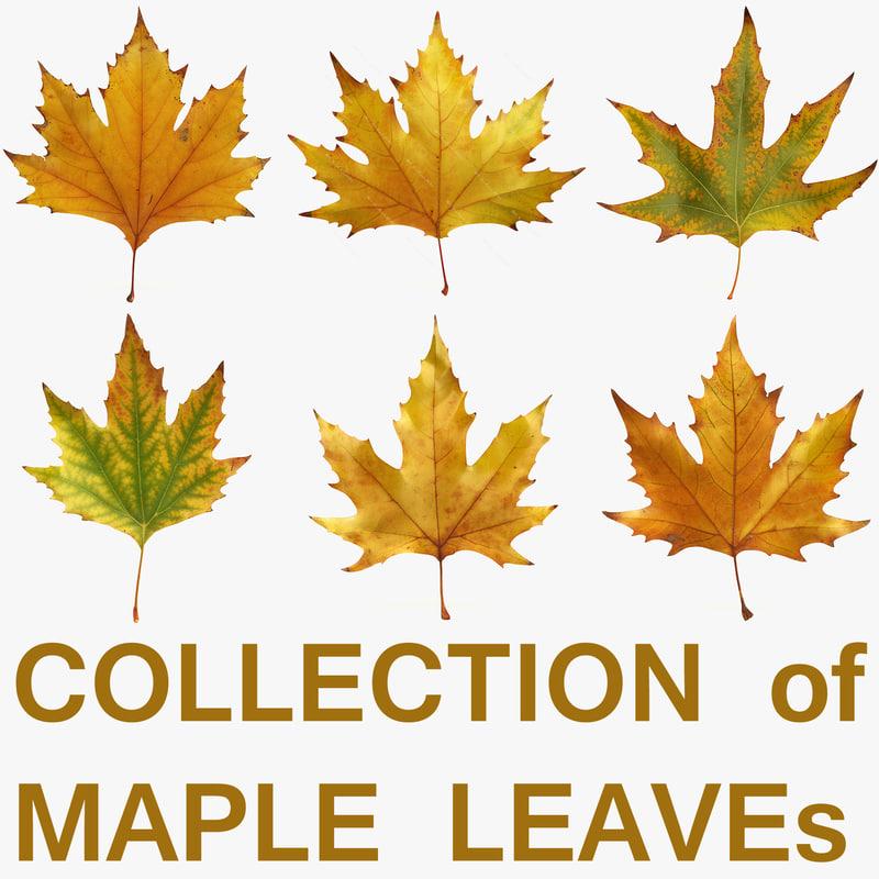leaves maple leaf obj