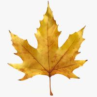 3d model realistic autumn maple leaf
