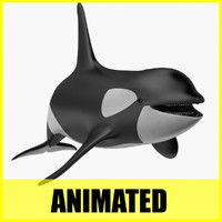 3d orca killer whale animation model