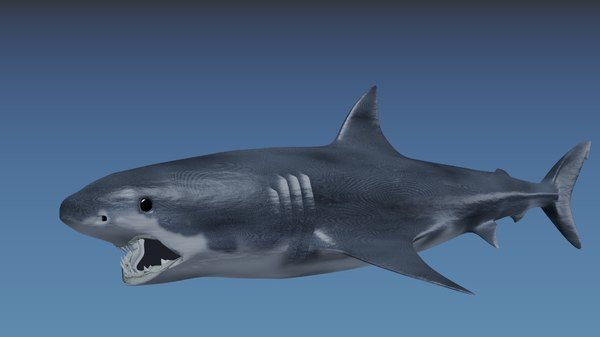 3d 3ds shark great white