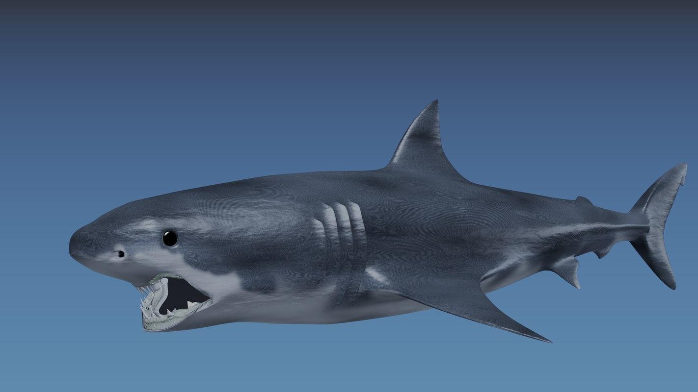 3d 3ds shark great white