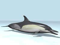 blend common dolphin