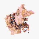 RNA 3D models