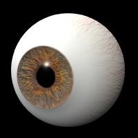 3d model eye iris