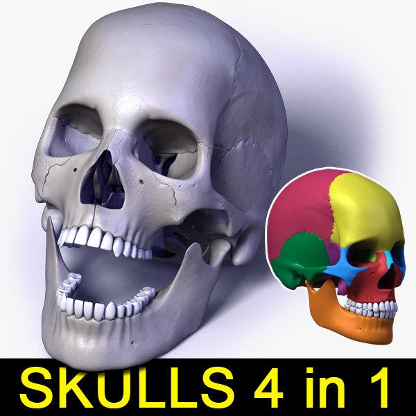 3d model human skull bones 4