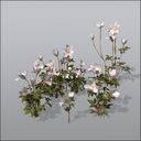 anemone flower 3D models