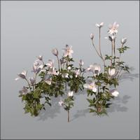 3d model wood anemone flower