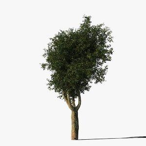 platanus tree bark types 3d max