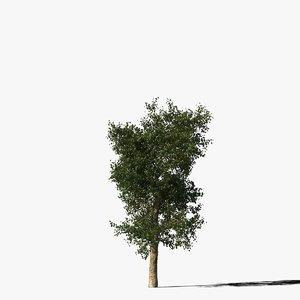 3d platanus tree bark