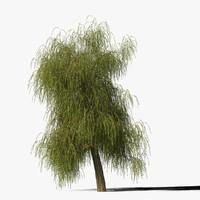 3d willow tree model