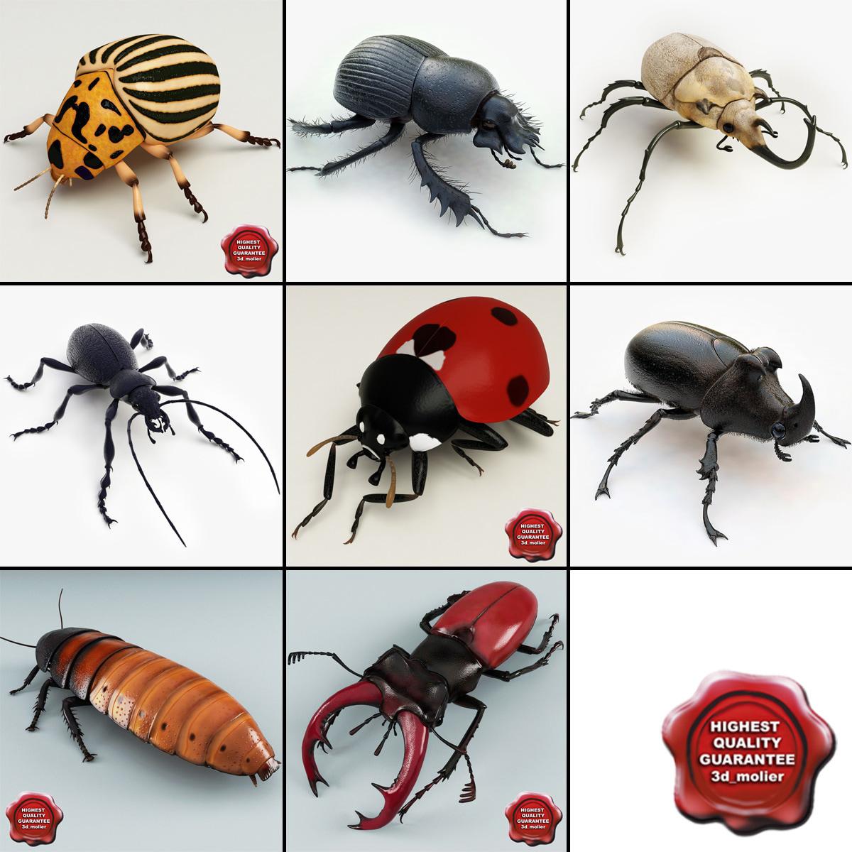 3d model bugs v3