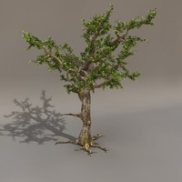 3d scary tree leaf model