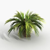 cycas palm 3d obj