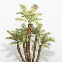 Plant Palm Phoenix Pack
