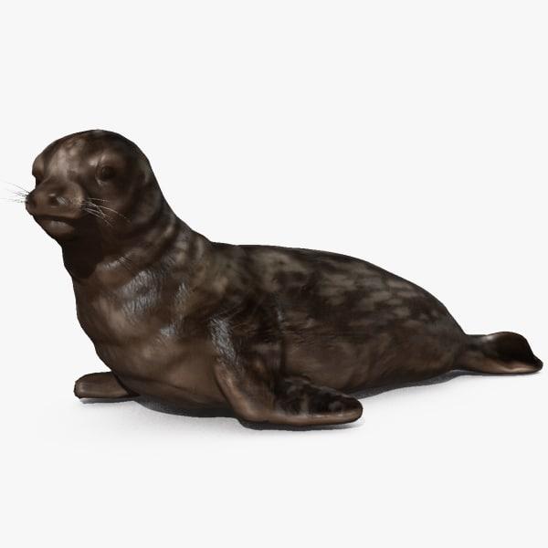 weddell seal max
