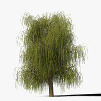 max willow tree