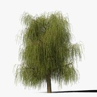 Willow Tree Type12