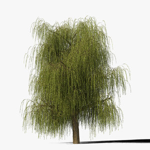 max willow tree