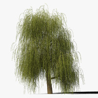 3d model willow tree