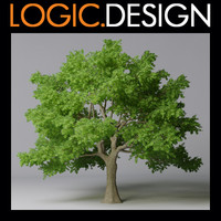 3d model tree maple