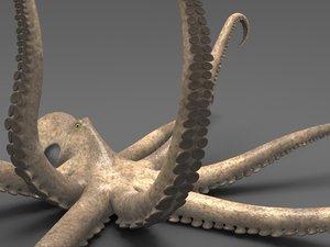 octopus fbx