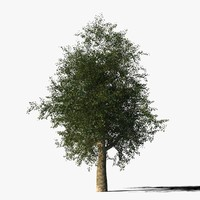 platanus tree bark 3d max