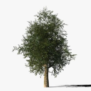 platanus tree bark 3d max