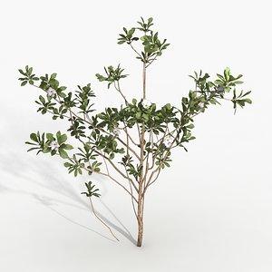 magnolia 3d max