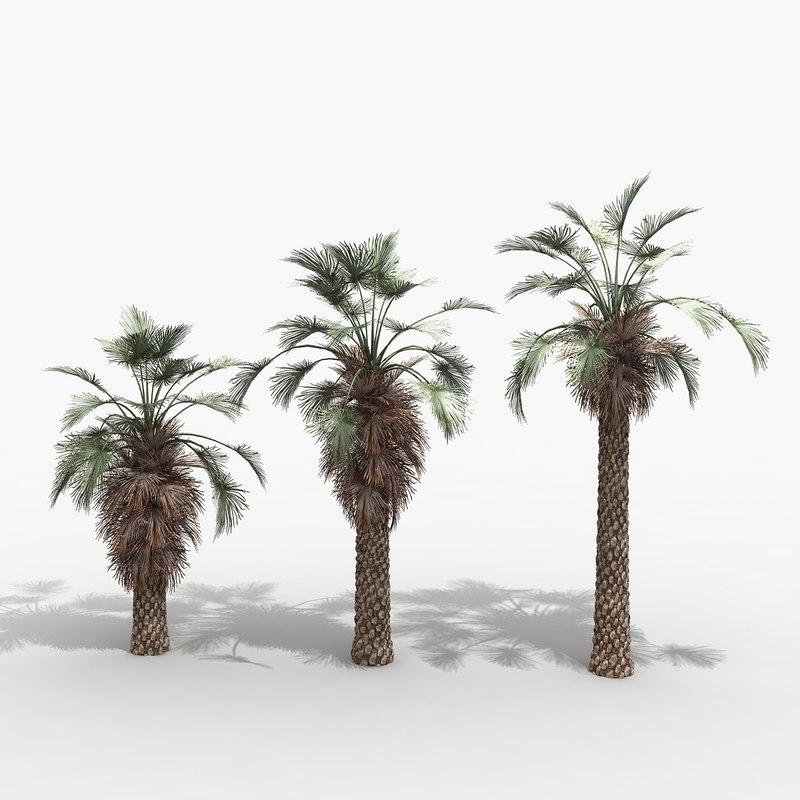 3ds max brahea palm