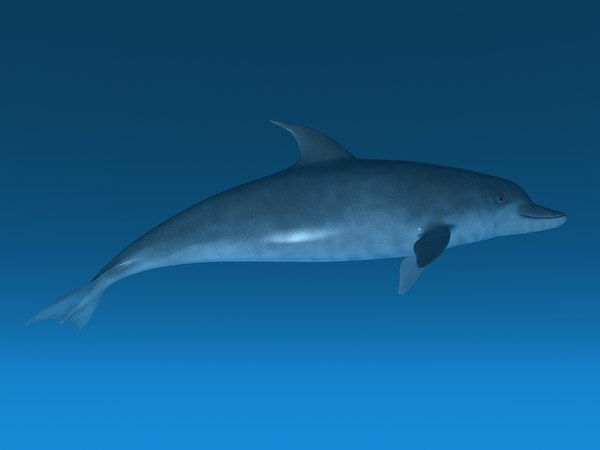 3d dolphin rig -