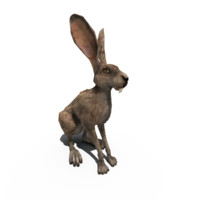 3d rabbit model