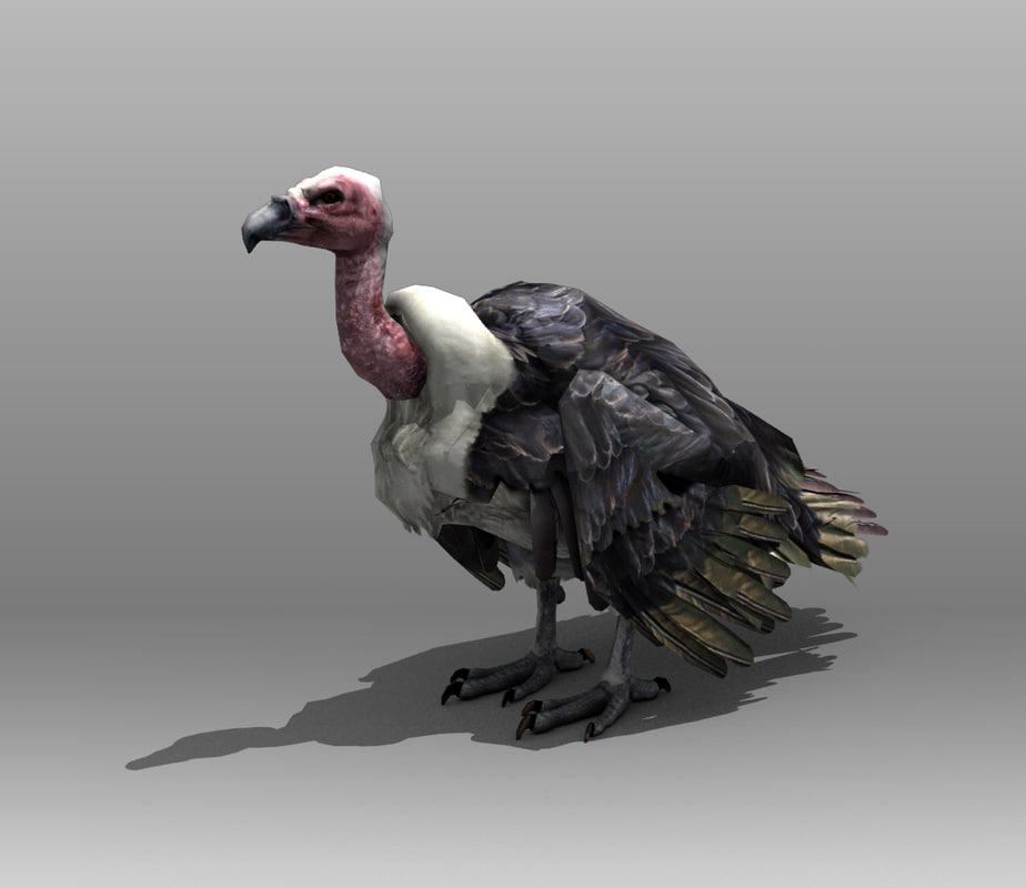 3d vultures birds
