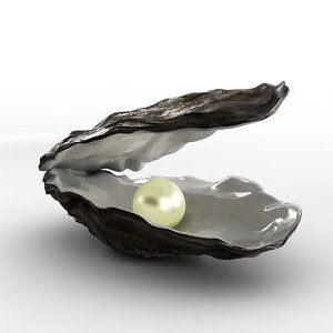 3d oyster shell
