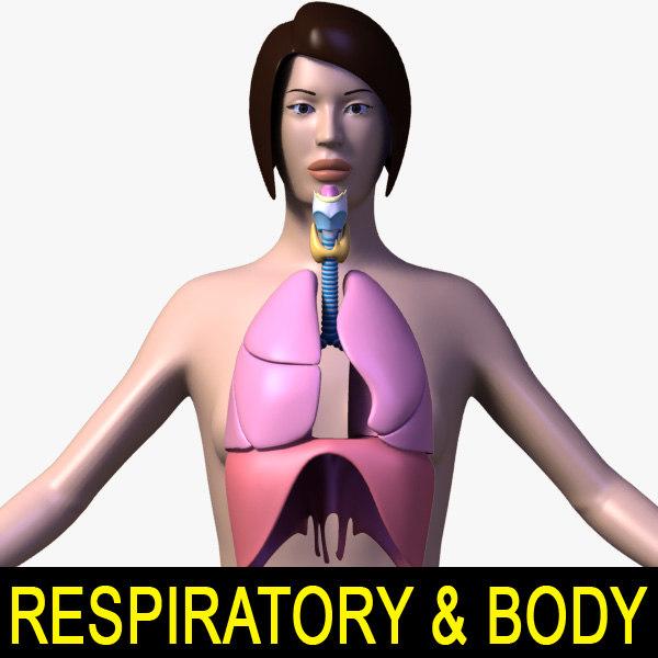 3d female body respiratory