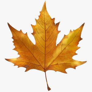 3d realistic autumn maple leaf