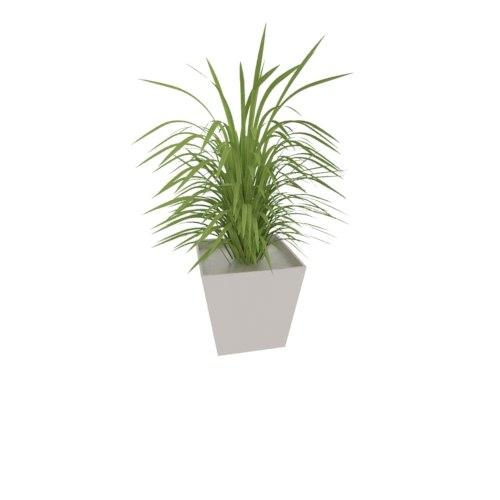 small grass plant 3d model