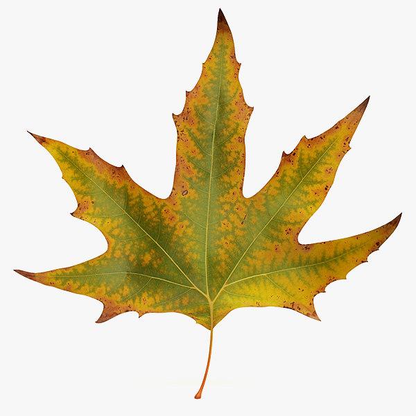 realistic autumn maple leaf 3d model