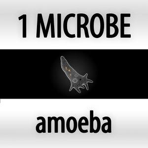 3d model microbes micro organisms