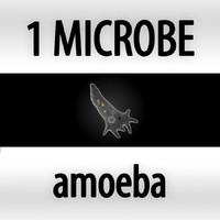 amoeba - amoeba proteus