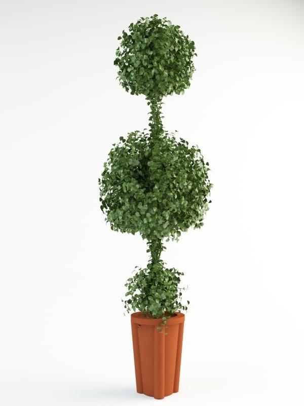 bush shrub max