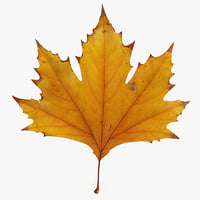 3d max realistic autumn maple leaf